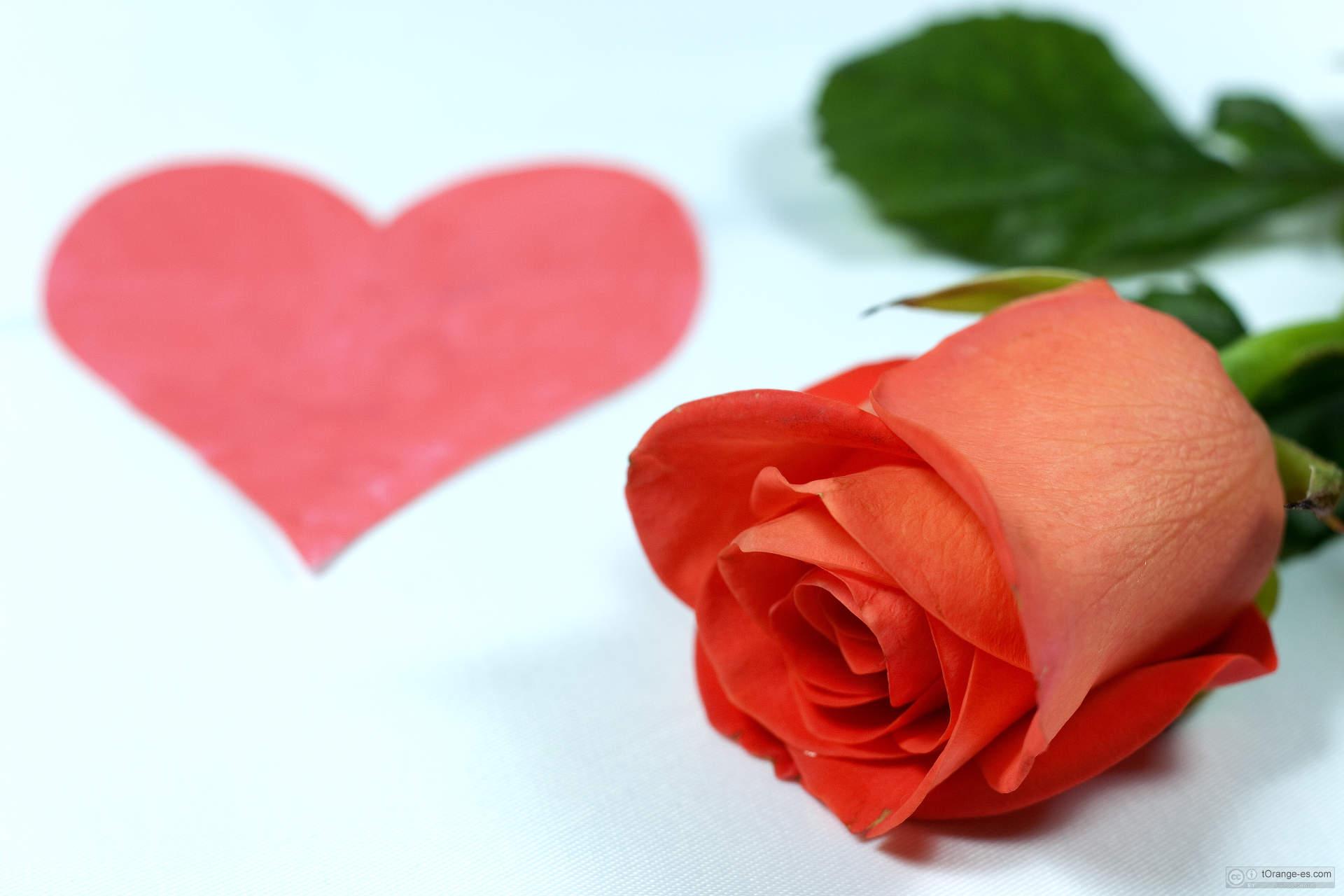 Fondo tarjetas del día de San Valentín.